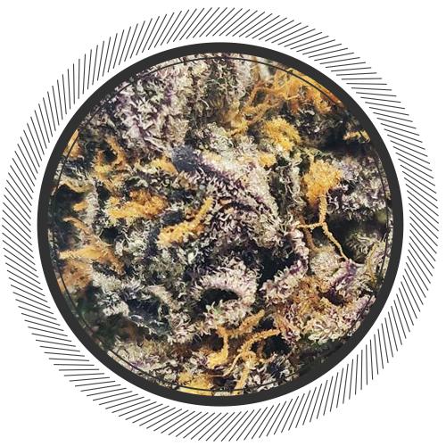 buy Sunset Sherbet strain online Canada