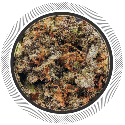buy Purple God strain online Canada