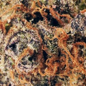 Purple God strain online Canada