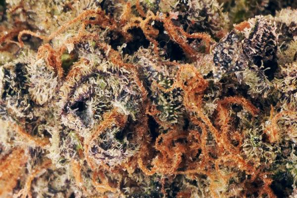 Souche Purple God en ligne Canada