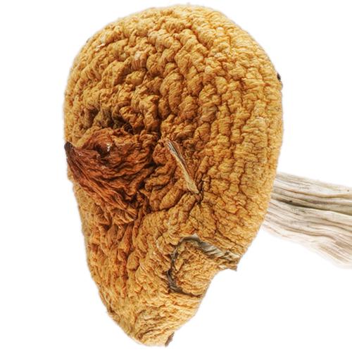 Creeper magic mushroom strain picture
