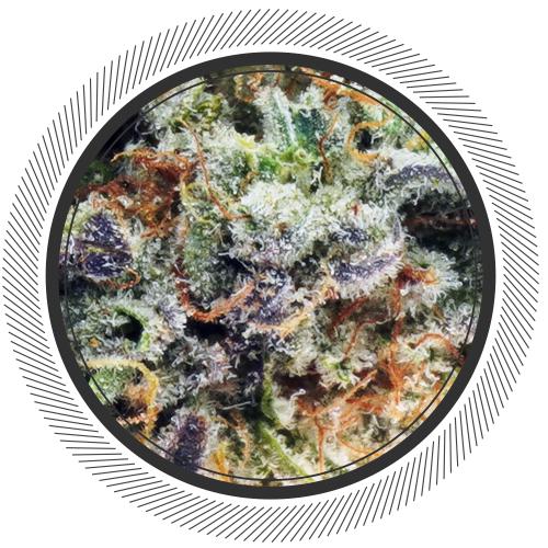 buy MAC 1 strain online Canada