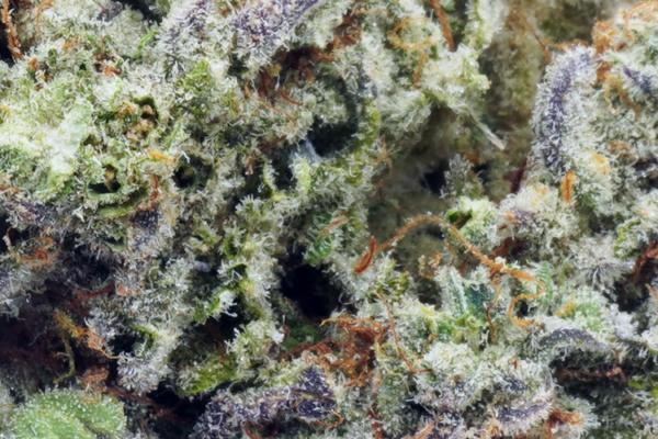 MAC 1 strain online Canada