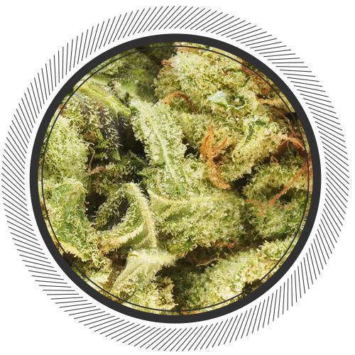 buy Papaya strain online Canada